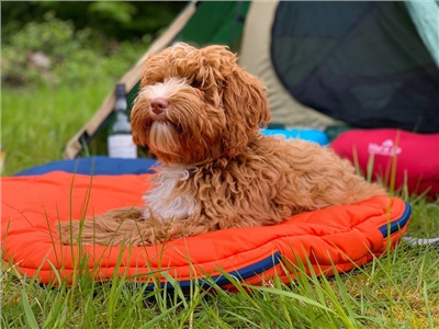 Woof & Co Dog Sleeping Bag   - Click to view a larger image
